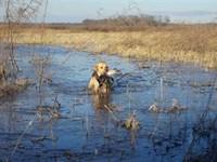 298 Acre Farm & Duck Hunting : Fisher : Poinsett County : Arkansas