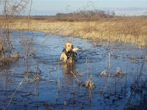 298 Acre Farm & Duck Hunting : Fisher : Poinsett County : Arkansas