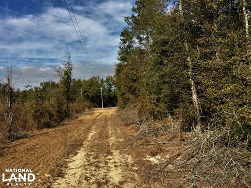 Hunting Property With Home Site : Williston : Barnwell County : South Carolina