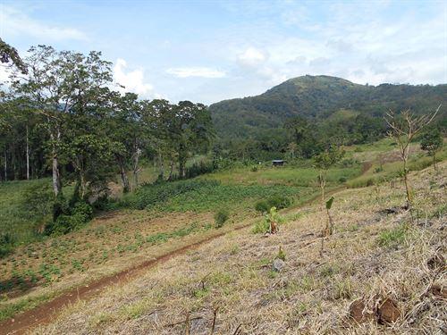 Off The Grid 60 Ac Riverfront Farm : Florencia De Turrialba : Costa Rica
