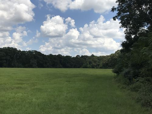 573+/- Acres - Offered Divided : Plains : Sumter County : Georgia