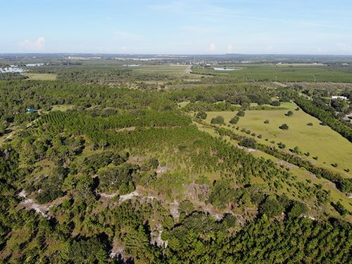 Camp Mack Road 100 Acres : Lake Wales : Polk County : Florida