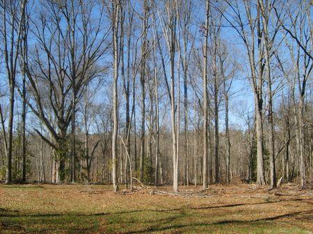 Residential Wooded Acreage : Union : South Carolina