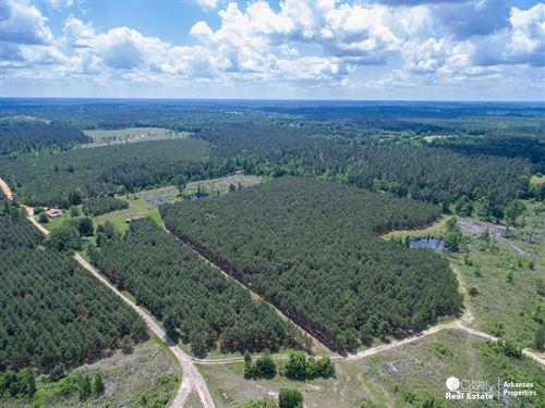 Timberland in South Arkansas : Arkadelphia : Nevada County : Arkansas