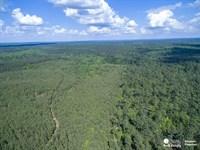 Timberland in South Arkansas : Burtsell : Clark County : Arkansas