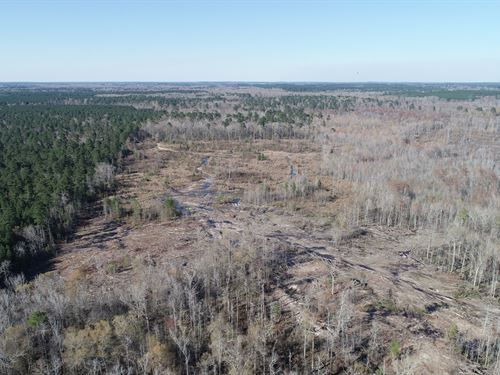 Large Acres Bottomland Hunting : Junction City : Union County : Arkansas