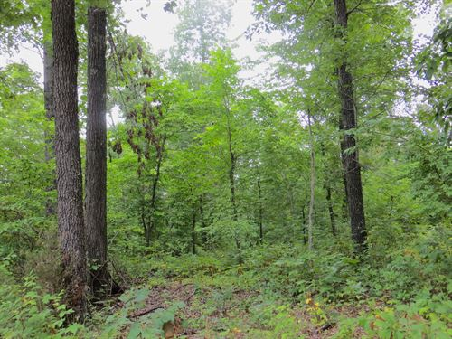 Arkansas Land For Sale : Mammoth Spring : Fulton County : Arkansas