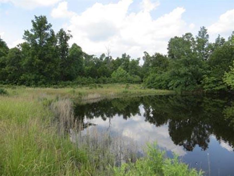 Land For Sale in Arkansas : Ranch for Sale : Mammoth Spring