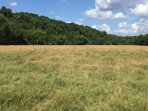 Arkansas Ozark Cattle Farm/Ranch : Marshall : Searcy County : Arkansas
