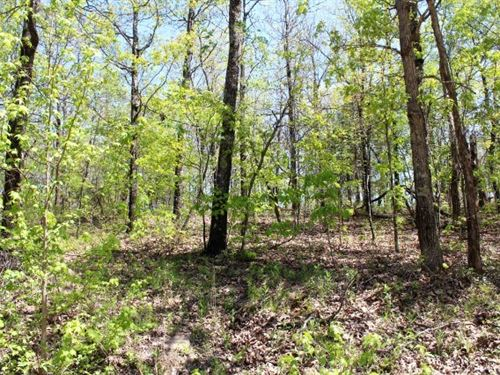 Wooded Acreage Mountain View : Mountain View : Stone County : Arkansas