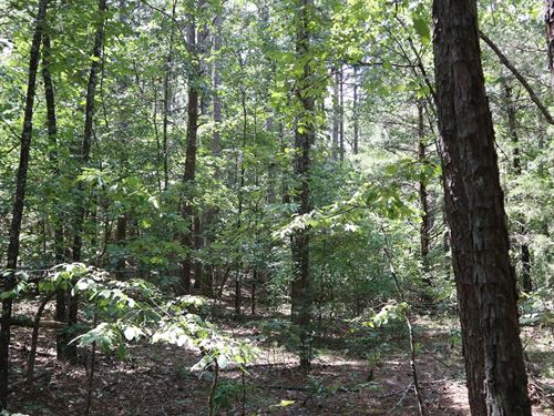 Ozark Hunting Timber Property : Oxford : Izard County : Arkansas