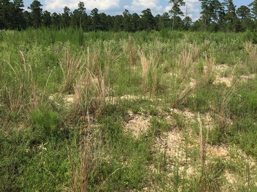 Saxon Estate Land Sale 08/16/2018 : Smackover : Union County : Arkansas