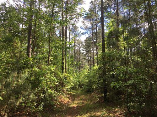 Natural Pine Timberland Hardwood : Stephens : Columbia County : Arkansas