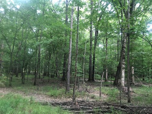 Hardwood Creek Bottom Hunting Land : Stephens : Columbia County : Arkansas