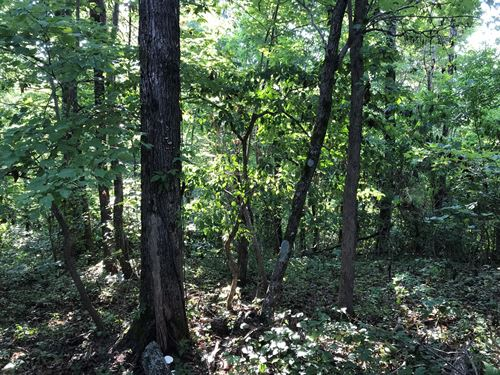 Recreational/Hunting Property : Witts Springs : Searcy County : Arkansas