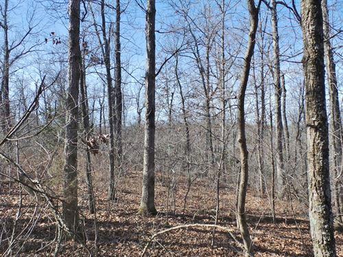 198 Acres Close To Bull Shoals : Yellville : Marion County : Arkansas