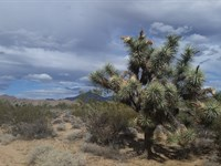 159.86 Acres, Stagecoach Trails : Yucca : Mohave County : Arizona