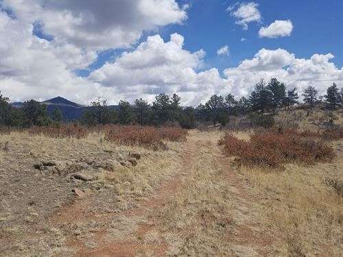 20 Acres, Central Colorado : Florissant : Teller County : Colorado