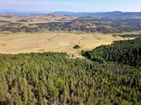 94 Acre Alpine Homestead-1080 Eagle : Westcliffe : Custer County : Colorado