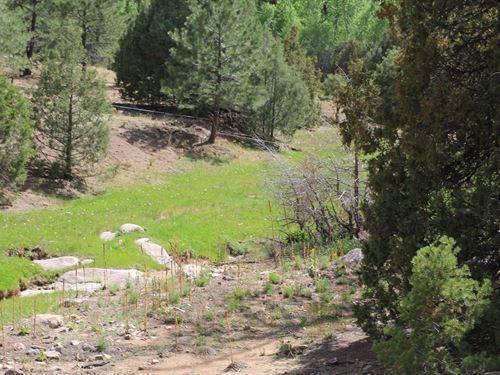 Hunting Property Bordering Public : Westcliffe : Custer County : Colorado