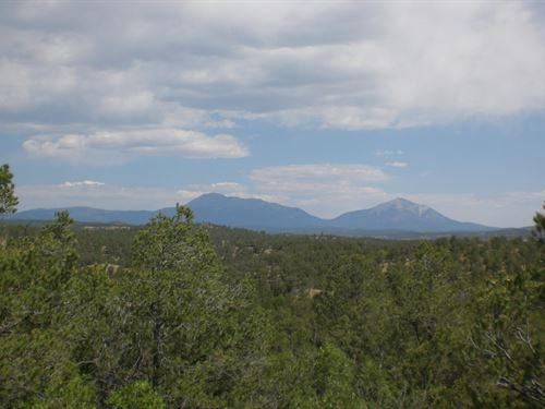 20 Acre Mountain Property West : Weston : Las Animas County : Colorado