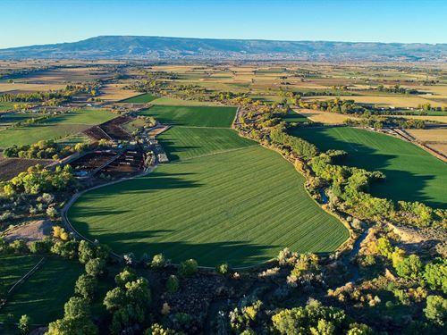 Cattle Farm Ranch Western Colorado : Olathe : Montrose County : Colorado