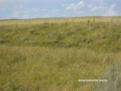 Grassland Lincoln County, Colorado : Punkin Center : Lincoln County : Colorado
