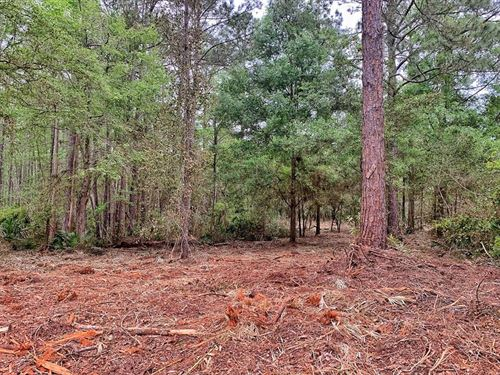 Great Location, 10 Heavily Wooded : Bell : Gilchrist County : Florida