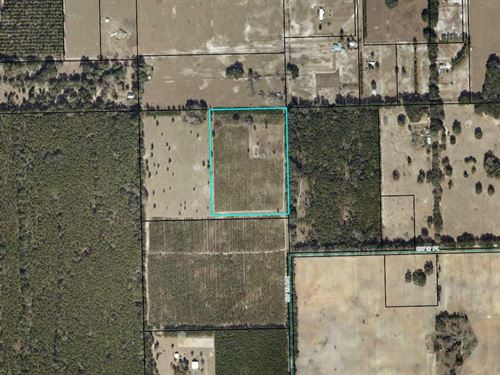 Perfect Home Site Acreage Gilchrist : Bell : Gilchrist County : Florida