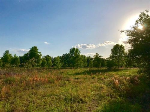 Gorgeous 10 Acres : Branford : Gilchrist County : Florida