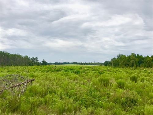 10 Acres North Gilchrist County : Branford : Gilchrist County : Florida