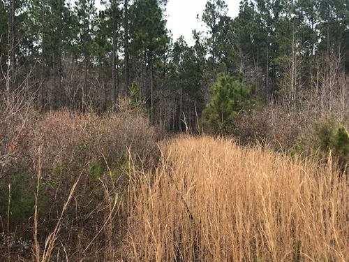 Timber/Recreational Tract Chipley : Chipley : Washington County : Florida