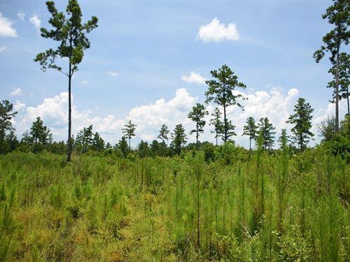 Vacant, Recreational Land Union : Lulu : Union County : Florida