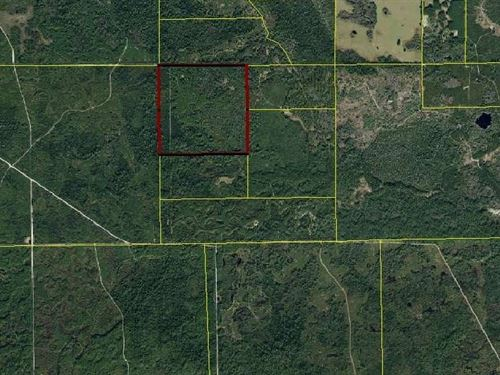 Land Property Mayo, FL $352,000 : Mayo : Lafayette County : Florida