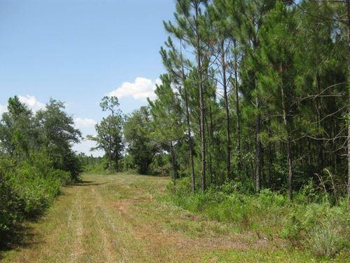 140 Acres Natural North Florida : Mayo : Lafayette County : Florida