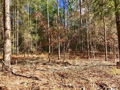 North Central Trenton,Fl Wooded : Trenton : Gilchrist County : Florida