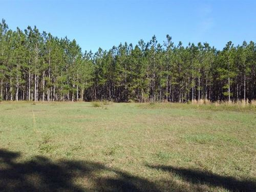 34.63 Acres Beautiful Planted Pines : Trenton : Gilchrist County : Florida