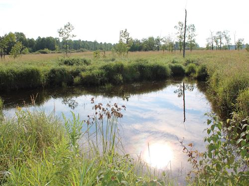 180 Acres Hunting Land Mille Lacs : Onamia : Mille Lacs County : Minnesota