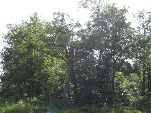 Recreational Hunting Land Viburnum : Belleview : Iron County : Missouri