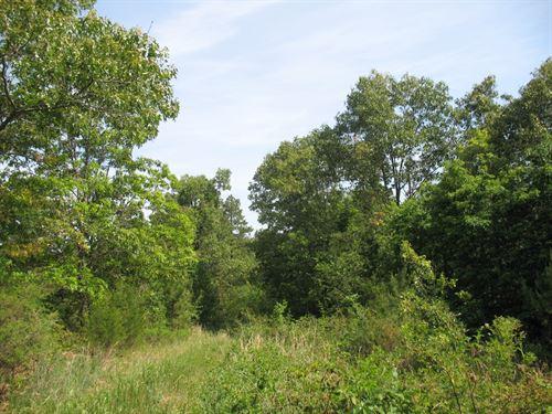 Wooded Acreage Seller Finance : Birch Tree : Shannon County : Missouri