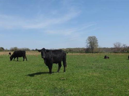 150 Acres of Good Pasture : Collins : Saint Clair County : Missouri