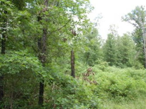 Just Reduced Missouri Ozarks Land : Gainesville : Ozark County : Missouri