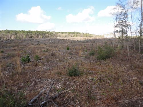 Timberland Hunting Land Franklin : McCall Creek : Franklin County : Mississippi