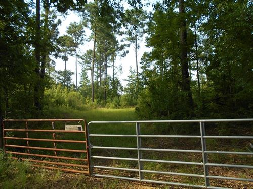 60 Acres Homochitto National Forest : McCall Creek : Franklin County : Mississippi