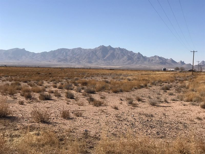 Farming in The High Desert : Ranch for Sale : Deming : Luna