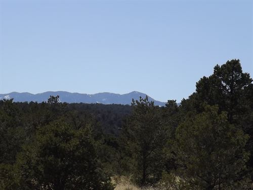 NM Mountain Property 35 Acre Wooded : Estancia : Torrance County : New Mexico