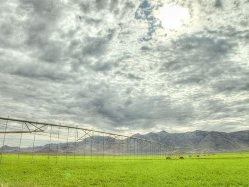 Farm New Mexico/Arizona Border, 2 : Rodeo : Hidalgo County : New Mexico