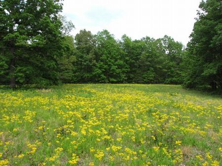 340.9 Acres, Wooded, Views : Pikeville : Bledsoe County : Tennessee