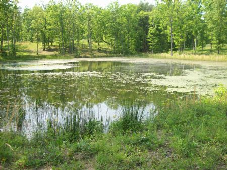 19.93 Acres..goregous Homesites : Pikeville : Bledsoe County : Tennessee