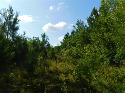 Private Tn Land, Deer & Turkey : Hohenwald : Lewis County : Tennessee